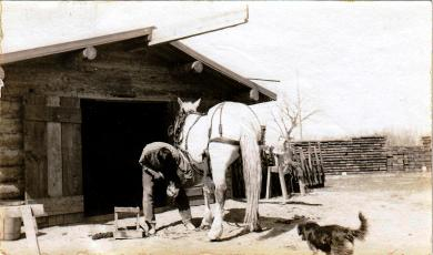 David Little Old Man Shoeing a Horse, 1910