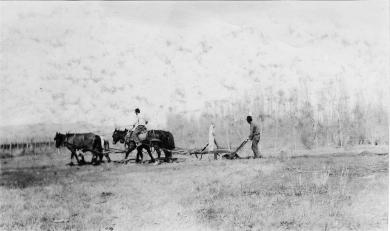 David Little Oldman Plowing Field, #3, 1910
