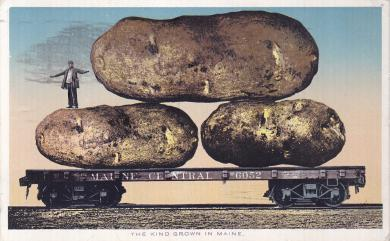 Maine Potatoes, c.1918
