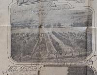 Orchard Planted by a Nez Perce Indian Orchardist, c.1910